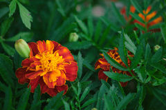 Flor positiva Imagenes de archivo