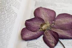 Flor presionada del clematis Imagen de archivo