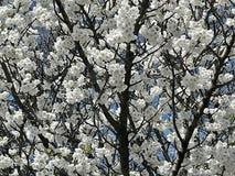 Flor preta branca foto de stock