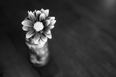 Flor preto e branco no vaso do tiki Imagens de Stock Royalty Free