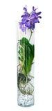 Flor púrpura de la orquídea de Vanda en un florero de cristal, Fotografía de archivo