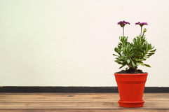 Flor púrpura hermosa en crisol rojo Imagen de archivo libre de regalías