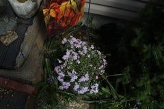 Flor purpurina blanca foto de archivo