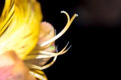 Flor que alcanza para el cielo en primavera Imagen de archivo