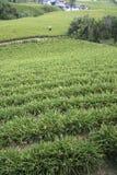 Flor que cultiva, Formosa imagens de stock