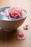 Flor que flota en el tazón de fuente blanco Fotografía de archivo libre de regalías
