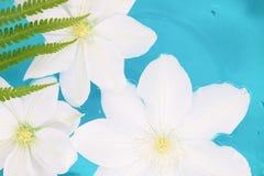 Flor que flutua na água azul, cores tropicais fotografia de stock