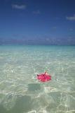 Flor que flutua na água do oceano Foto de Stock Royalty Free