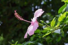 Flor que hace frente a Sun Fotografía de archivo libre de regalías
