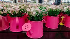 Flor, ramalhete, loja, grupo de flores, primavera fotos de stock