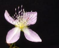 Flor rara imagens de stock royalty free