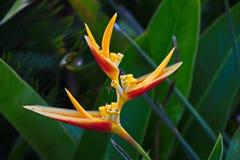 Flor rara tomada en Ipanema Foto de archivo libre de regalías