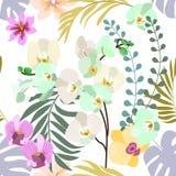Flor real das orquídeas ilustração stock