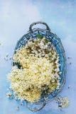 Flor recientemente escogido del elderflower y del acacia en una cesta foto de archivo libre de regalías