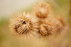 Flor redonda Imagens de Stock