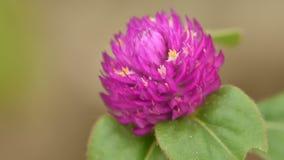Flor redonda púrpura Fotografía de archivo