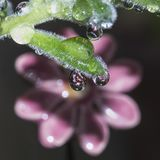 Flor refletida por uma gota Fotos de Stock Royalty Free