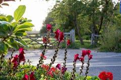 Flor retroiluminada Imagem de Stock