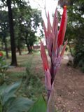 Flor roja Imágenes de archivo libres de regalías