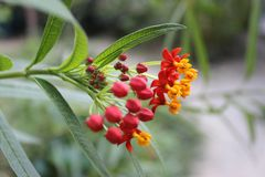Flor roja Arkivbild