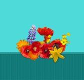 Flor roja, anaranjada, amarilla en la cerca verde Amapolas rojas, lirio amarillo, lupine azul, maravilla anaranjada Foto de archivo libre de regalías