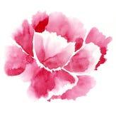 Flor roja blanda Imágenes de archivo libres de regalías