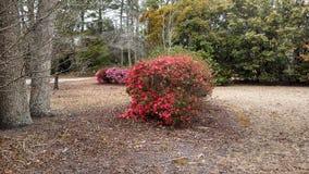 Flor roja Bush Fotografía de archivo