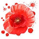 Flor roja de la amapola ilustración del vector