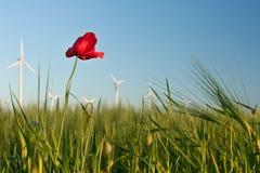 Flor roja de la amapola en el campo de la cosecha con las turbinas de viento Fotos de archivo