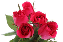 Flor roja de Rose con usted. imagen de archivo