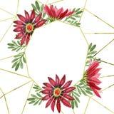 Flor roja del gazania Flor botánica floral Cuadrado del ornamento de la frontera del capítulo Fotos de archivo
