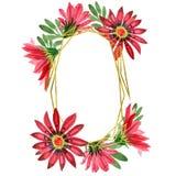 Flor roja del gazania Flor botánica floral Cuadrado del ornamento de la frontera del capítulo Foto de archivo