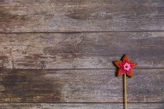 Flor roja del pan de jengibre pintado a mano en fondo de madera Visión superior Postre dulce como regalo para el día de las mujer imagenes de archivo