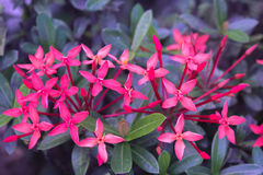 Flor roja del punto Fotografía de archivo