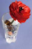 Flor roja del ranúnculo. Foto de archivo
