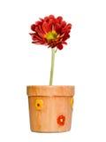 Flor roja en crisol de cerámica Fotografía de archivo