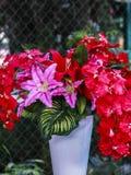Flor roja en el florero foto de archivo