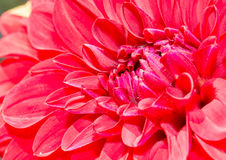 Flor roja en el jardín botánico imagenes de archivo