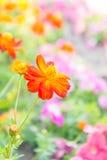 Flor roja en el parque, flor colorida Foto de archivo