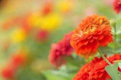 Flor roja, en fondo de la falta de definición Fotos de archivo