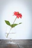 Flor roja en fondo del blanco del florero Imagen de archivo