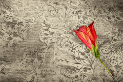 Flor roja en fondo del grunge libre illustration