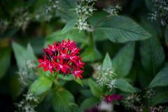 Flor roja en jardín botánico imágenes de archivo libres de regalías