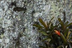 Flor roja en tronco de árbol fotografía de archivo