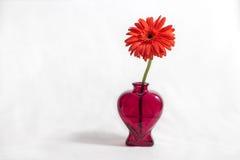 Flor roja en un florero con forma del corazón Fotografía de archivo