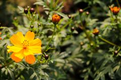 Flor roja en un jardín Fotos de archivo