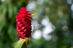 Flor roja en un jard?n foto de archivo libre de regalías