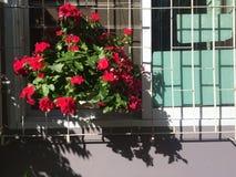 Flor roja en ventana fotos de archivo libres de regalías