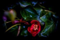 Flor roja entre las hojas fotos de archivo