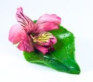 Flor roja exótica Imagen de archivo libre de regalías